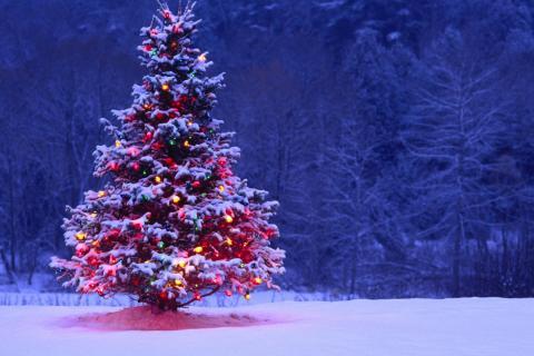 Christmas-trees--1527020-480x320