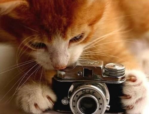 animal_camera12